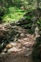 Dans les bois apr�s Razcestle Pod - Slavkovskym Stftom.<br> (Hautes Tatras)