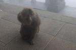 Attention singe dangeureux
