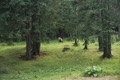 Rencontre avec ours au Monts Bucegi