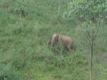 El�phants sauvages dans la Periyar Tiger Reserve