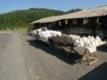 Fourrures vendues sur le bord de la route.