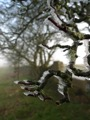 Gel sur les branches ... Il fait bien frais !