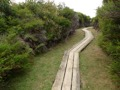 Wooden boardwalk protecting the delicate ecosystem