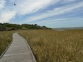 Princetown wetland