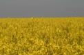 Que de jaune ...