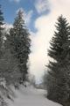 Montee tranquile dans les bois