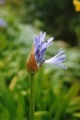 Ile fleurie ... pas trop � cette saison ... ;-))