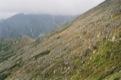 On voit le Sedlo pod Ostrwou au bout du chemin (� gauche sur la photo) et le col � sa droite (l� o� le chemin semble plus large).<br> (Hautes Tatras)
