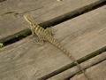 Little lizard - Australia Zoo