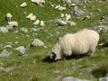 En revenant sur Zermatt