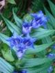 En ce d�but de septembre le parc du Triglav et la vall�e de la Soca sont TRES fleuris