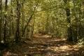 Prommenons nous dans les bois ...